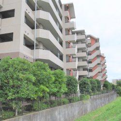 マンションのすぐ裏が遊歩道になっており、緑や川のせせらぎなど、お散歩やランニングに最適です。(外観)